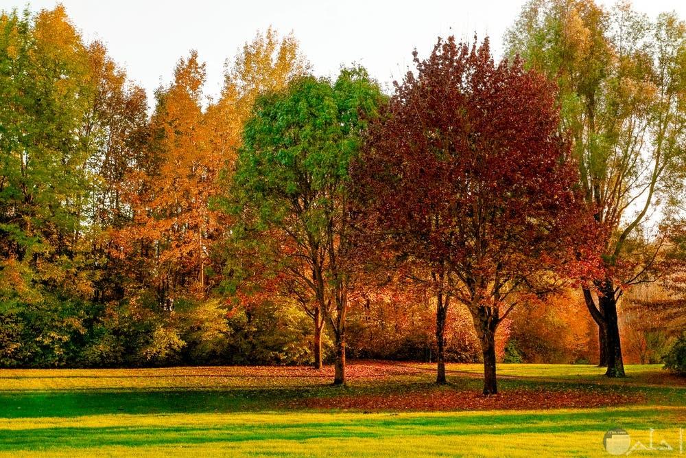 صور أشجار