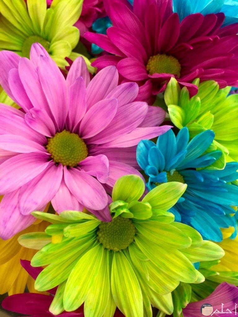 صور زهور مدهشة