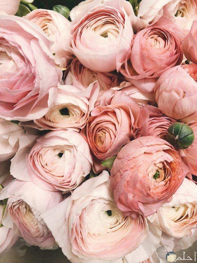 أروع صور زهور