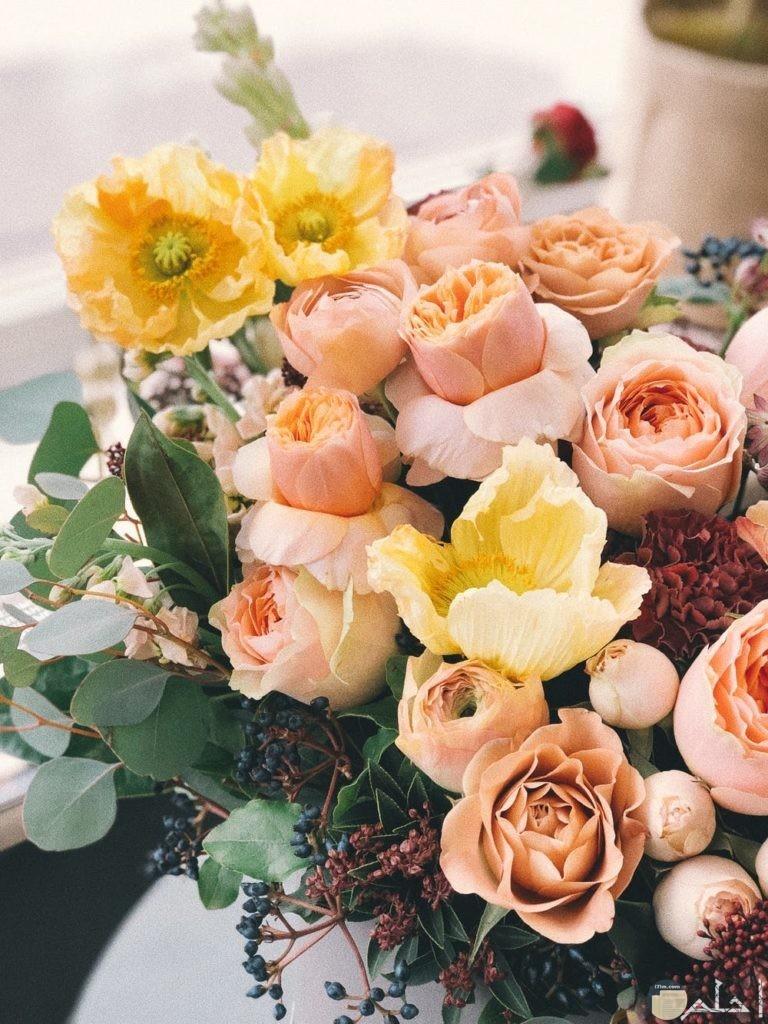 صور زهور تحفه