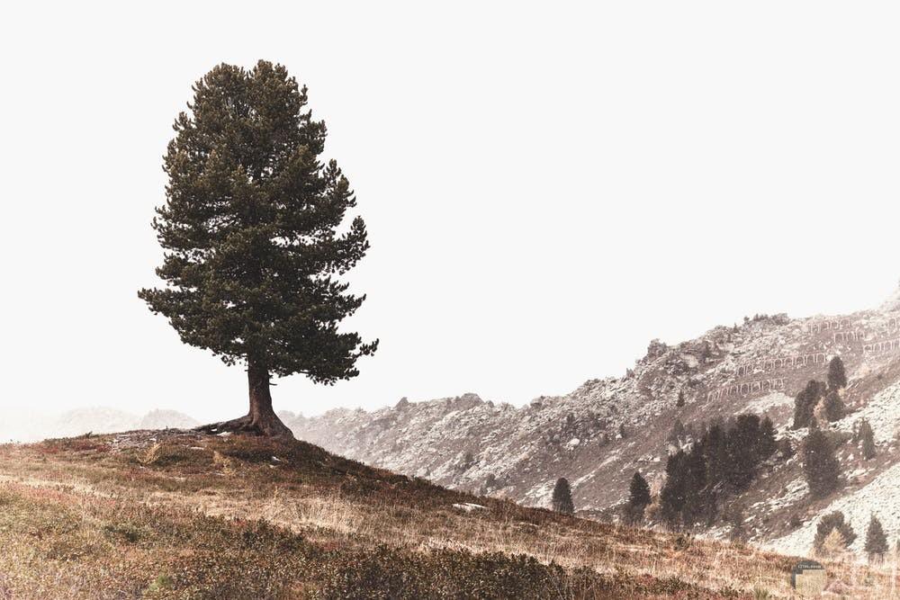 أجمل صور أشجار مميزة جدا