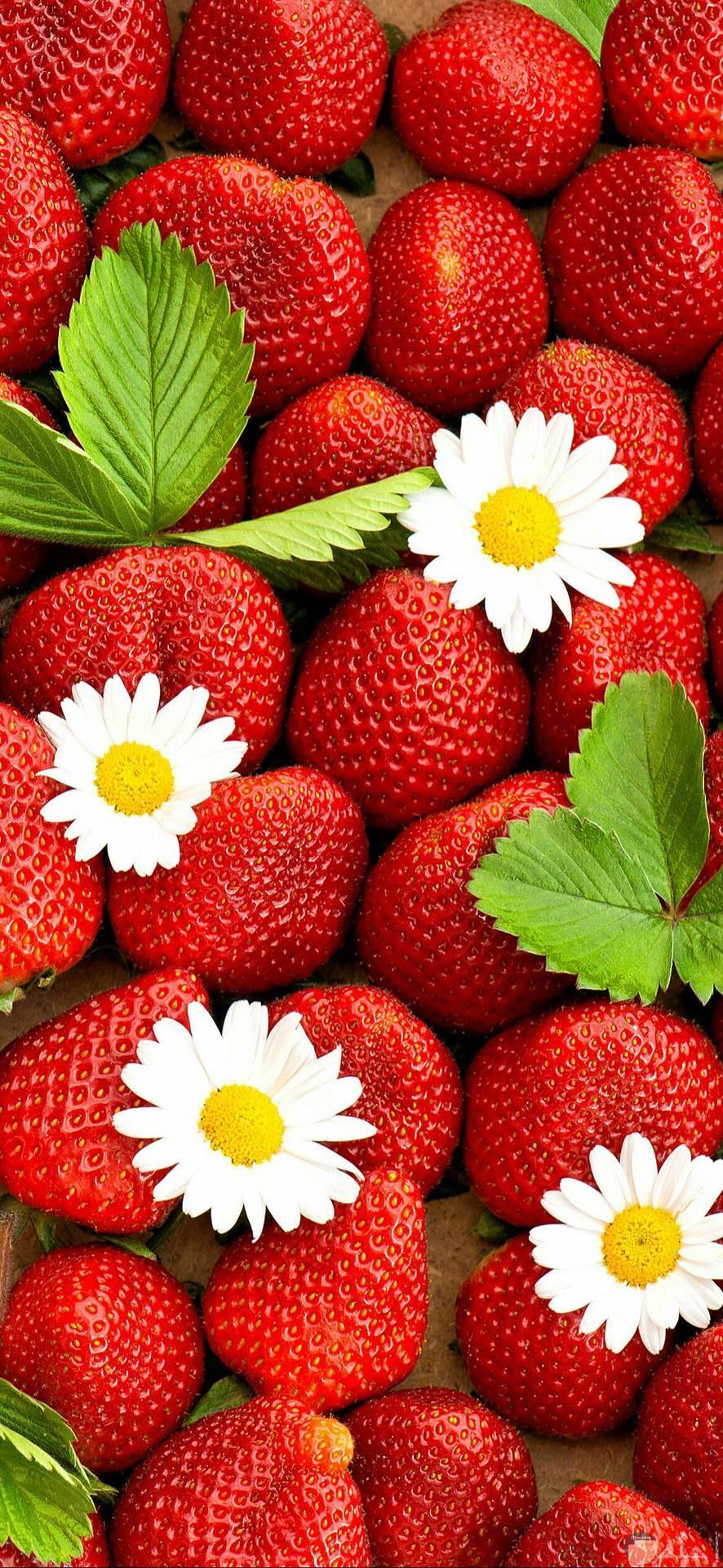 أجمل صور فراولة
