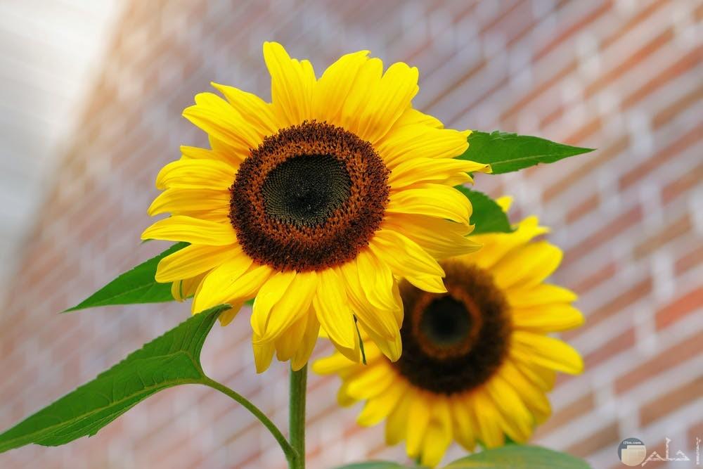 صور زهور مختلفة
