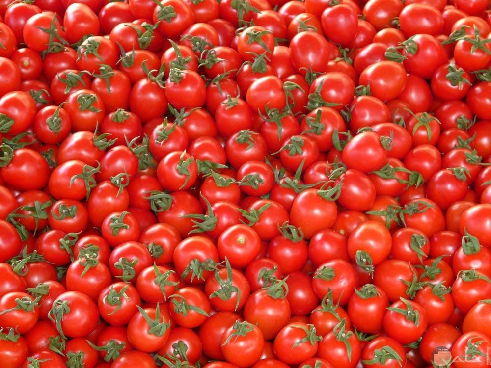 صور طماطم مختلفة