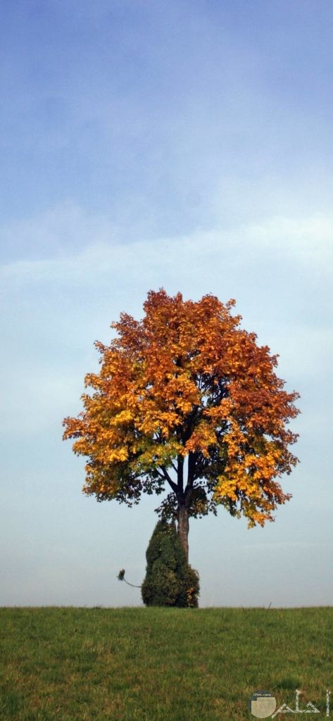 صور أشجار مختلفه