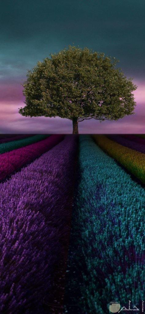 صور أشجار مدهشة