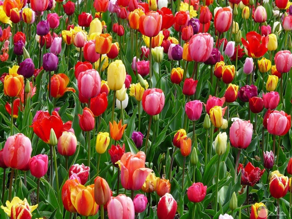 صور زهور مميزة