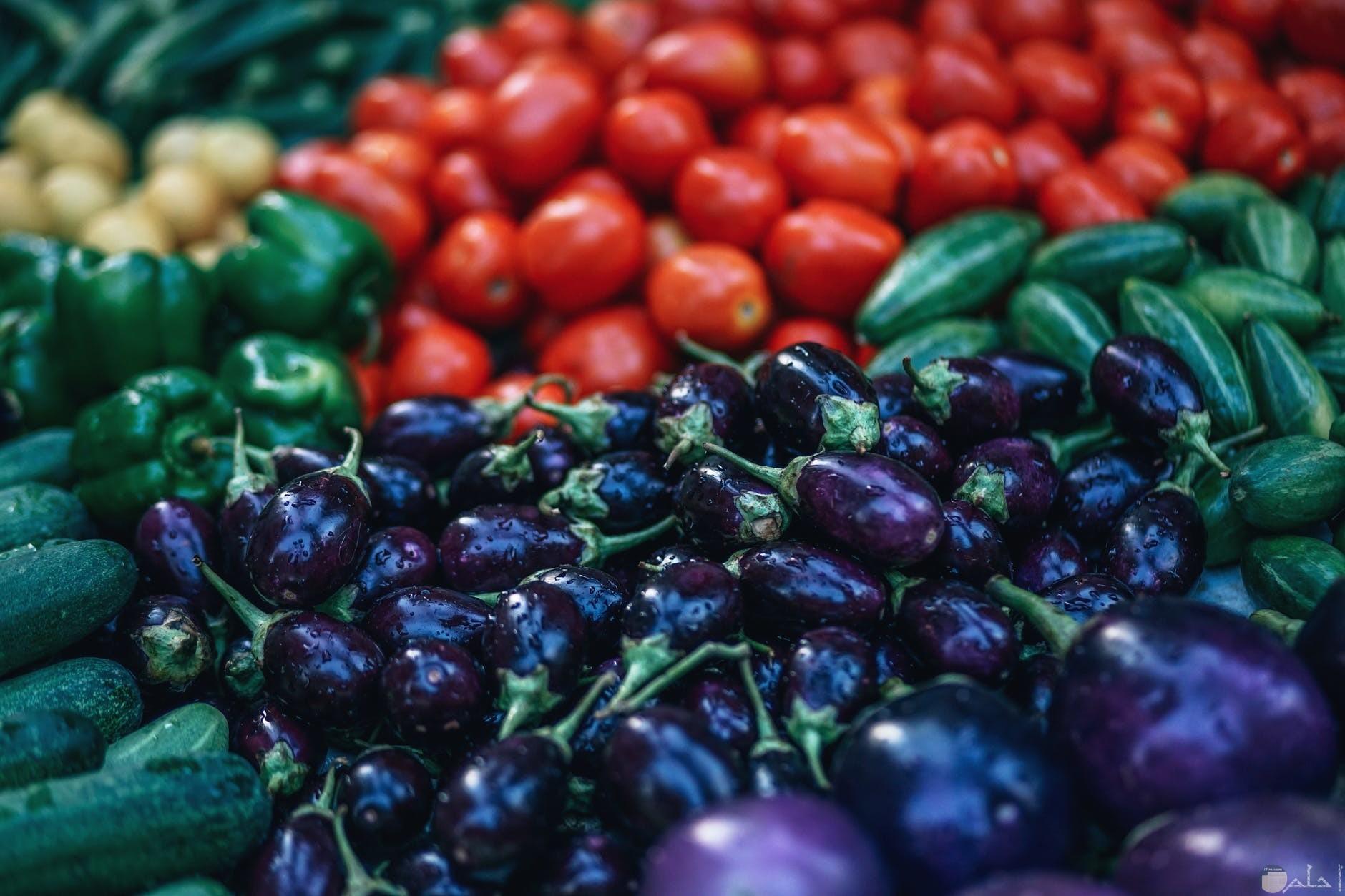 الباذنجان الطماطم والفلفل الاخضر والخيار