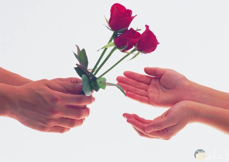 الزهور الحمراء أجمل هدية