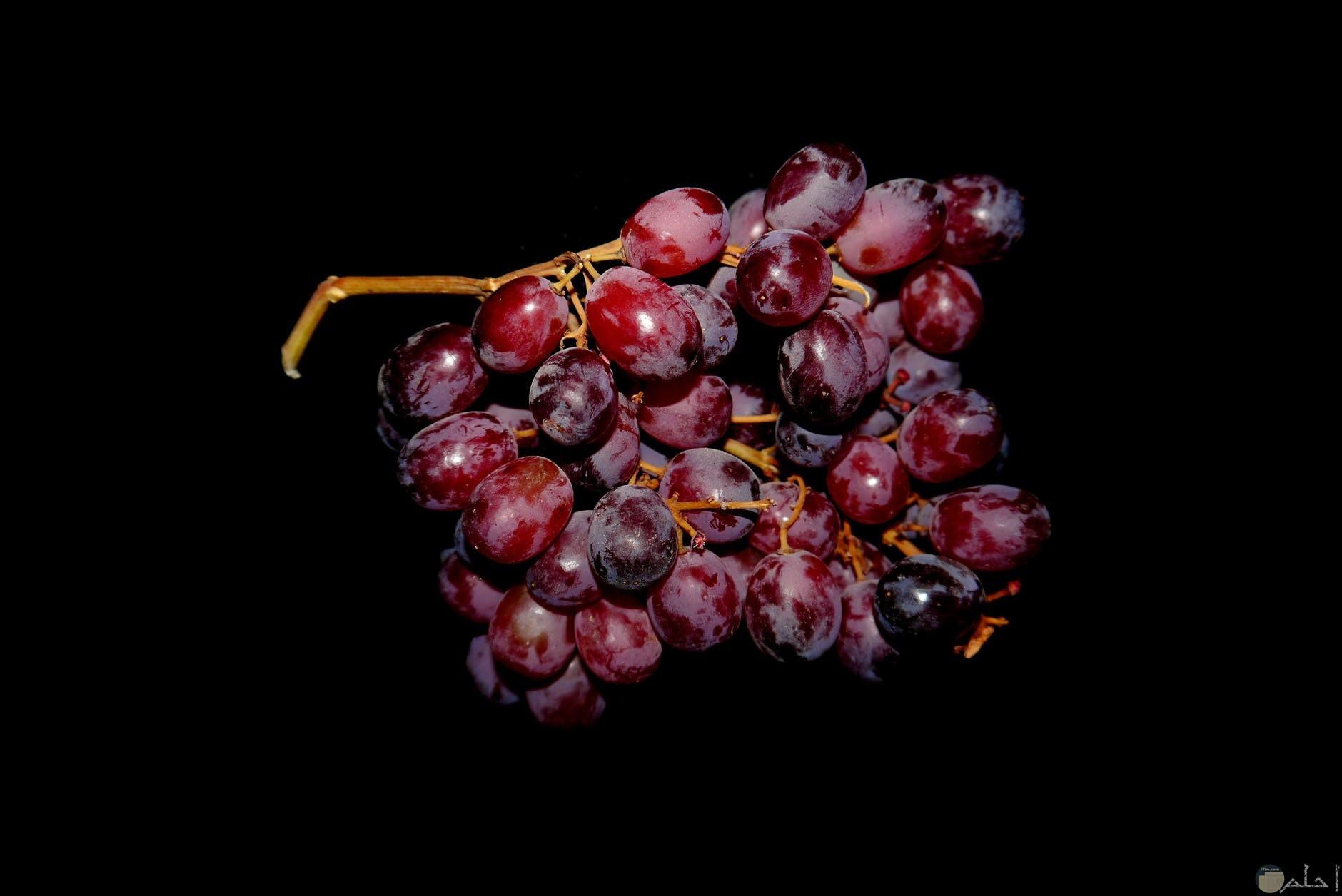 العنب الاحمر من الفواكه المفضلة عن الكبير والصغير