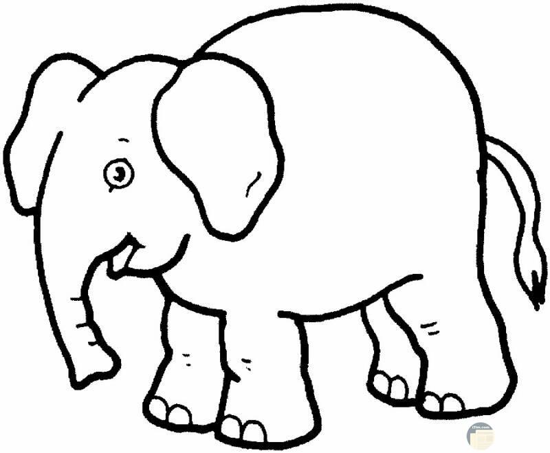 الفيل الضخم من الصور المرسومة الجميلة
