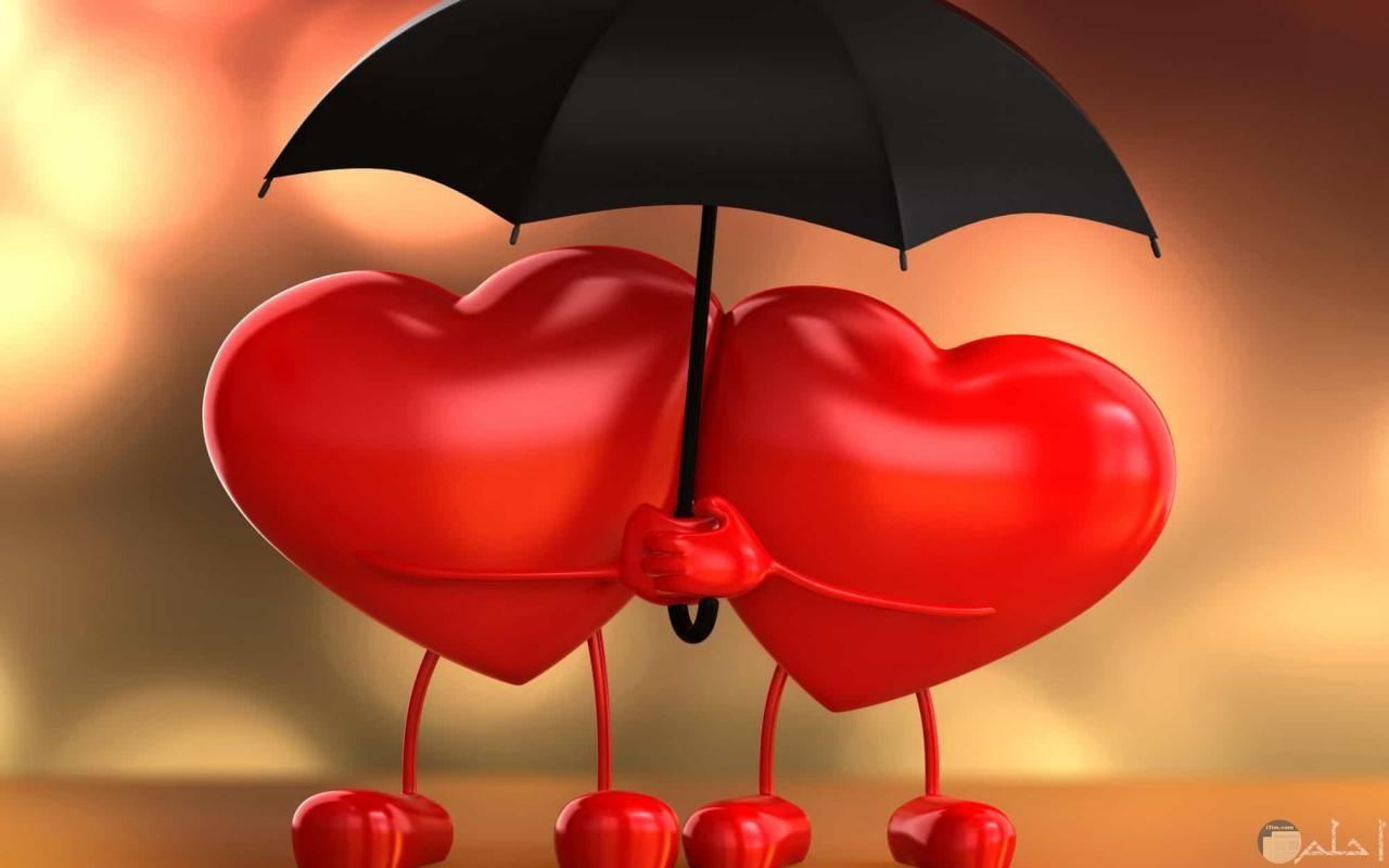 المحب مع المحبوب دائما وابدا