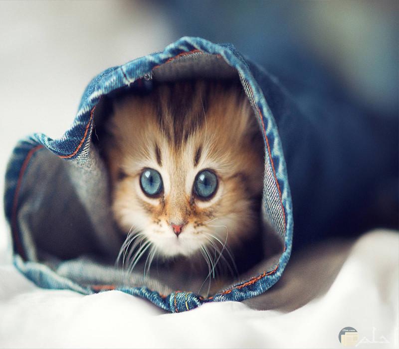قطة ساحرة تختبأ بالملابس