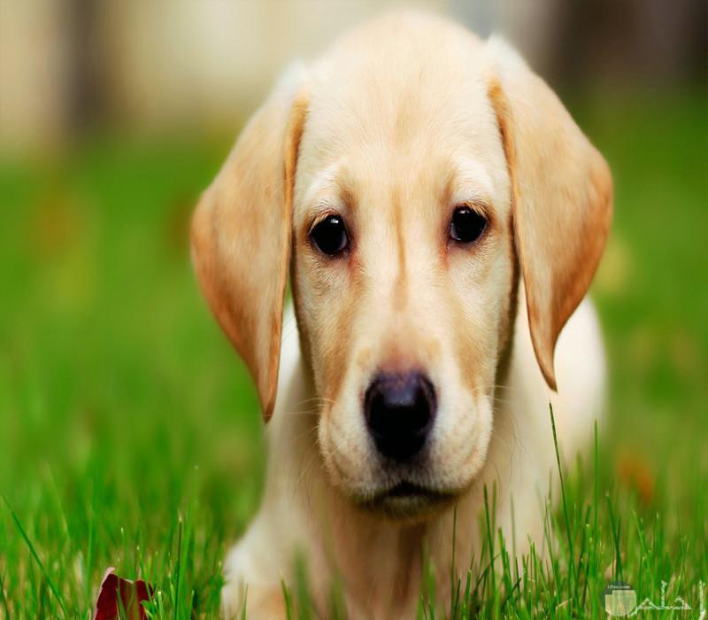 كلب أليف وسط الأرض