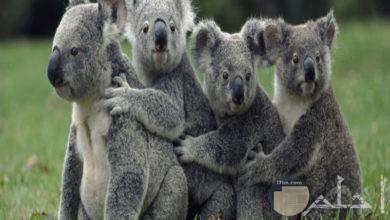 تحميل صور حيوانات متنوعة