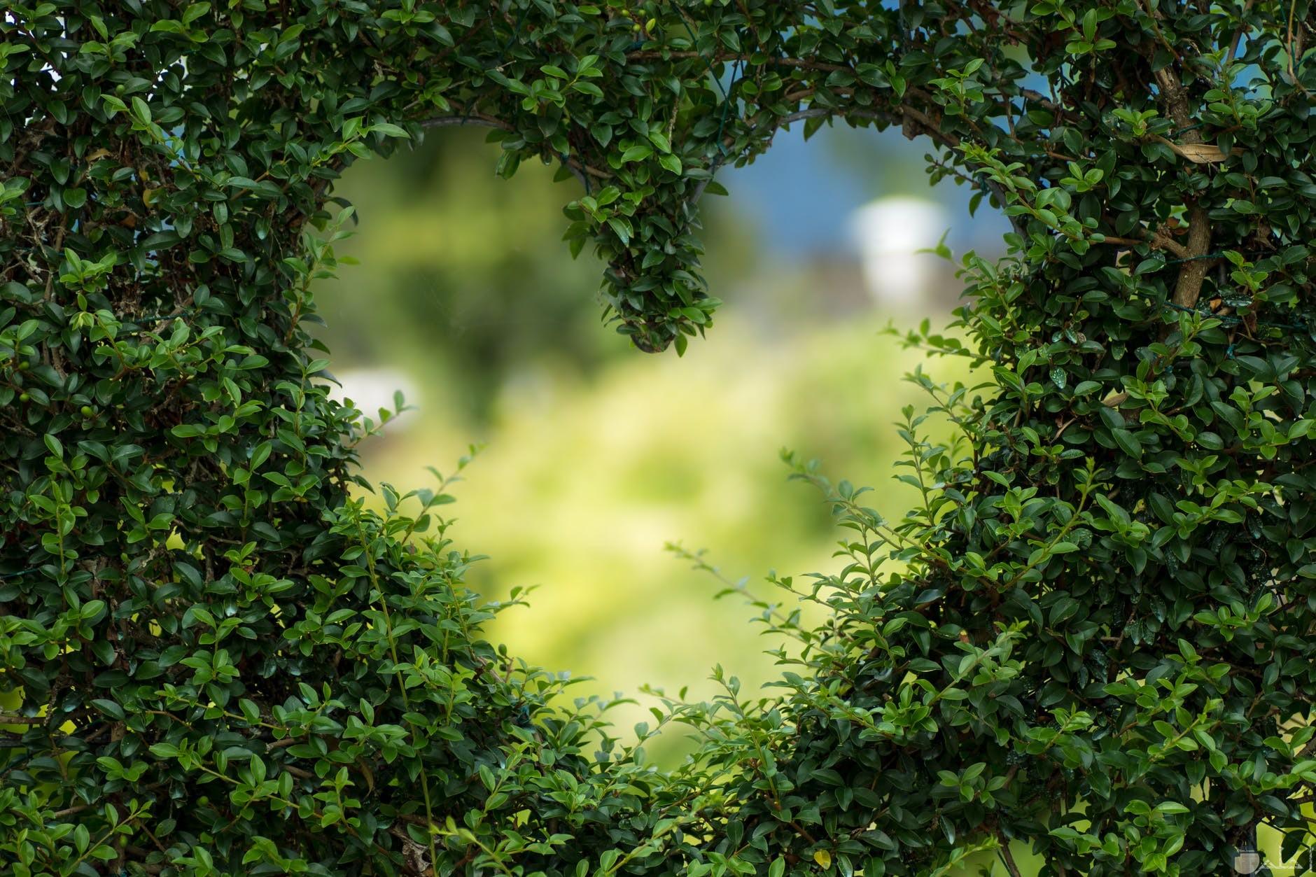 ثيمات قلوب للعشاق والمحبين
