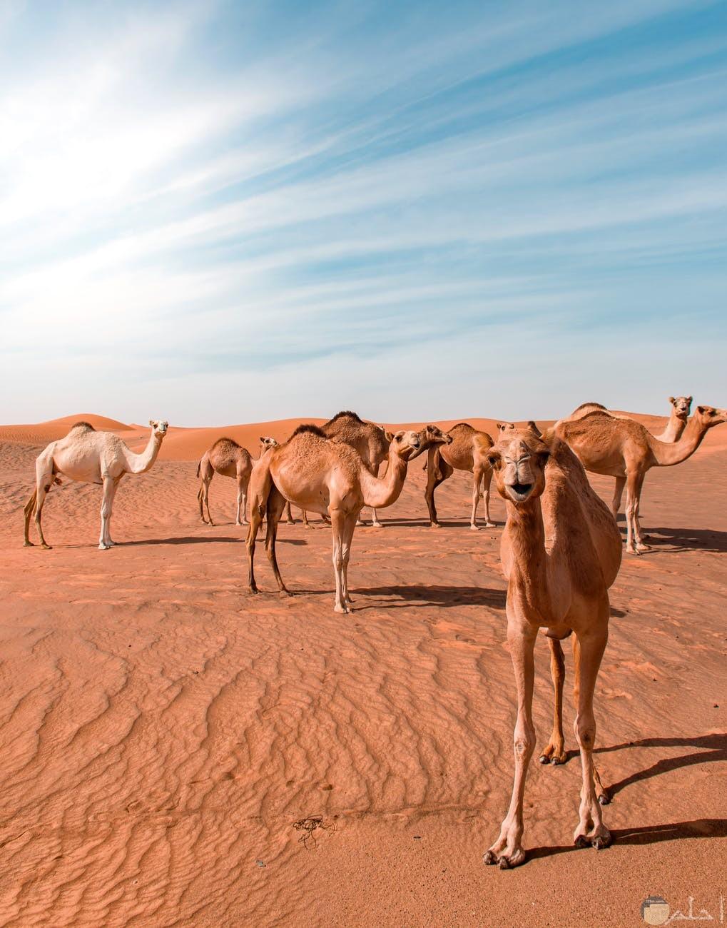 صورة طبيعية لجمال الصحراء