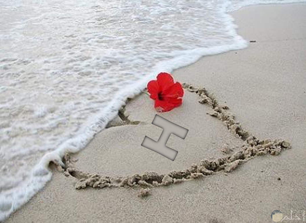 حرف H على الرمال مع زهرة حمراء