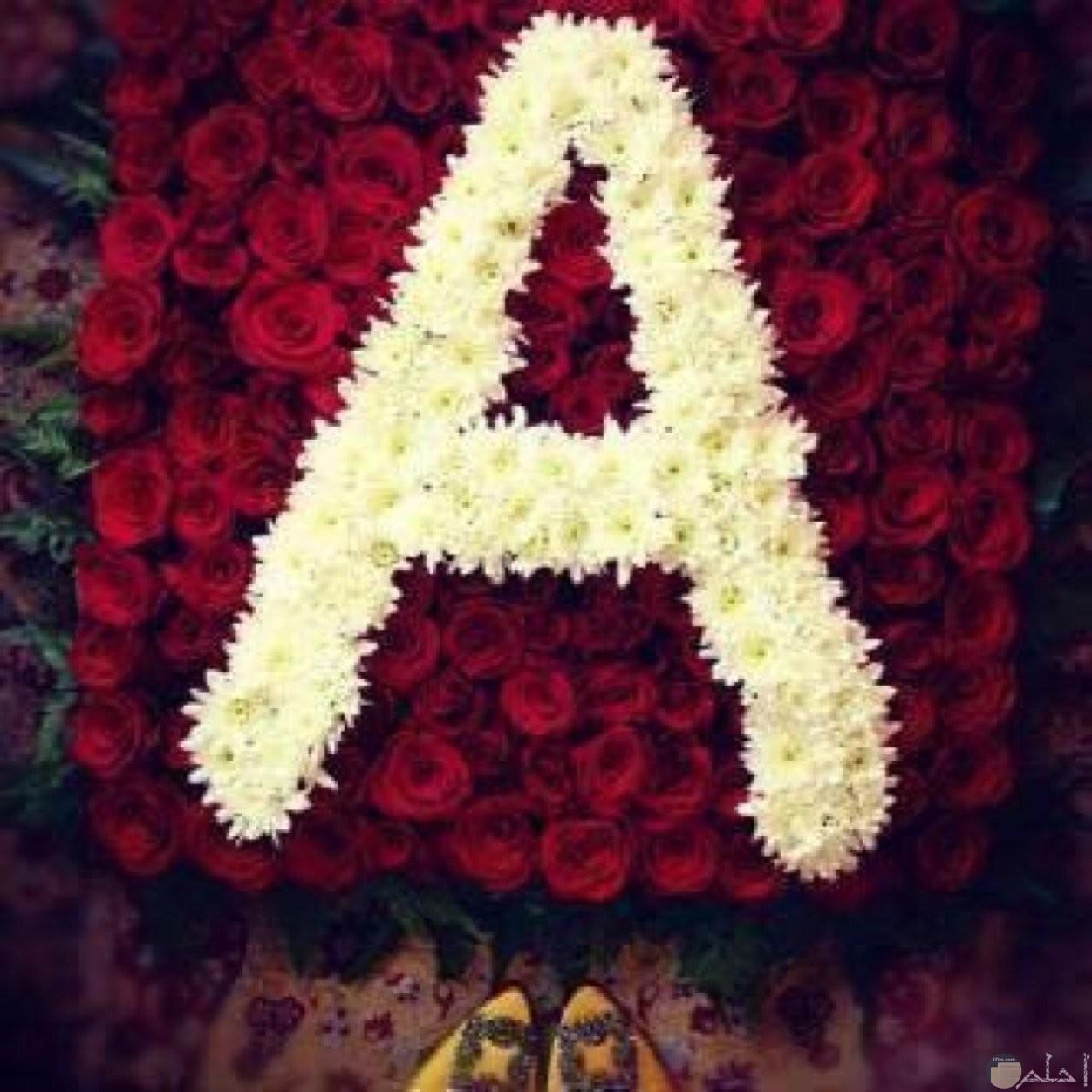 حرف A بخلفية ورد رائعة