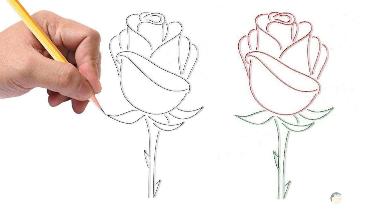 خطوات لرسم الورد