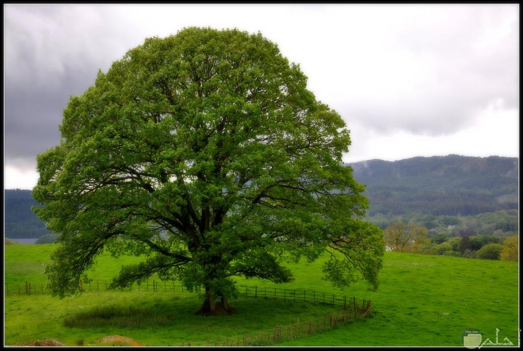 خلفية شجرة رائعة