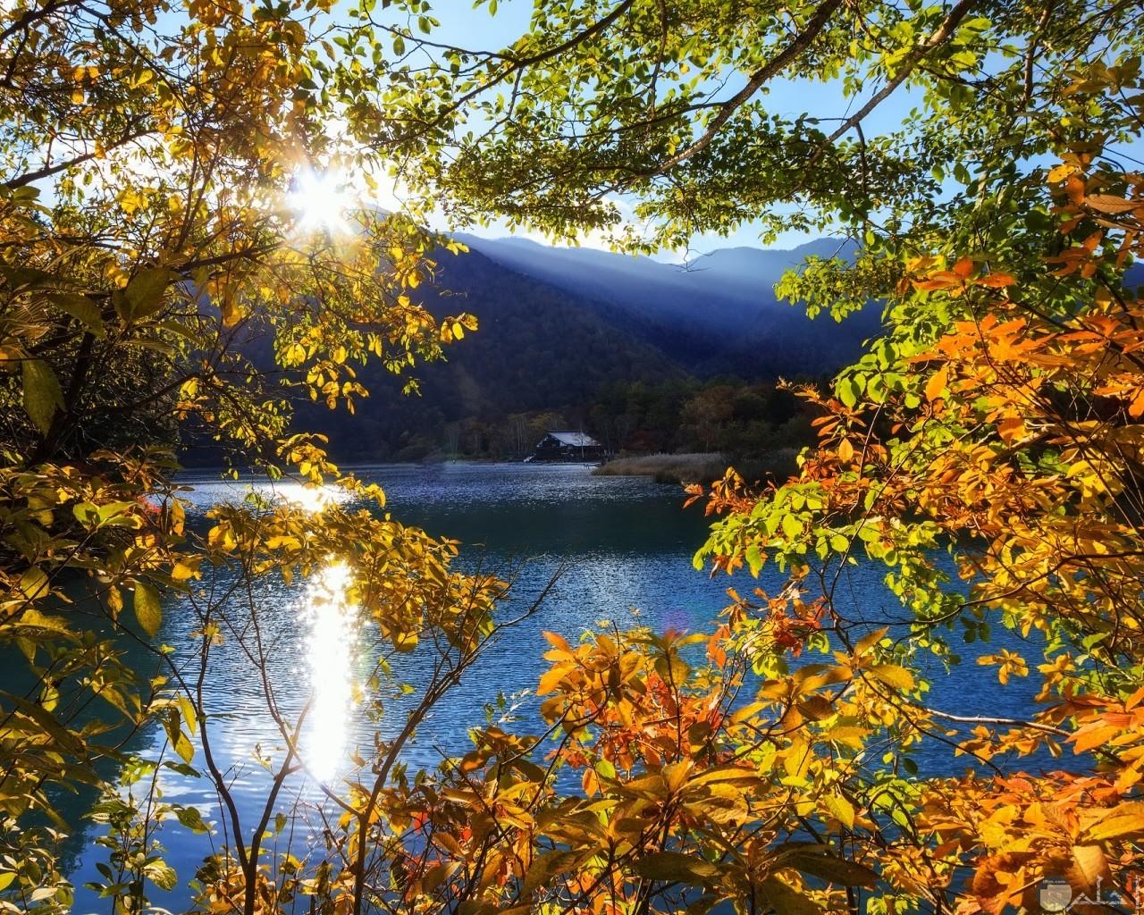 الاشجار واشعة الشمس مع منظر البحر الرائع