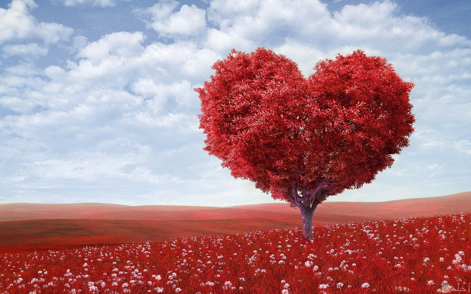 شجرة عبارة عن قلب كبير محببة لدي البنات
