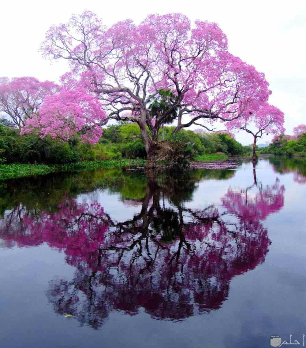 شجرة مميزة