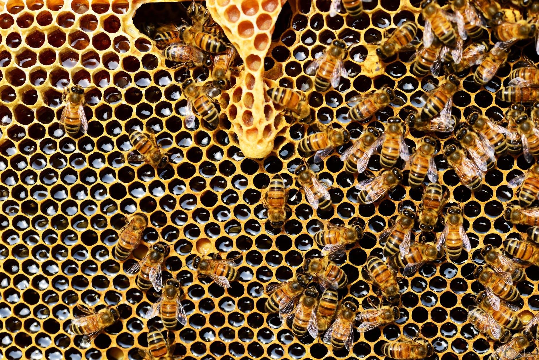 شكل خلية النحل