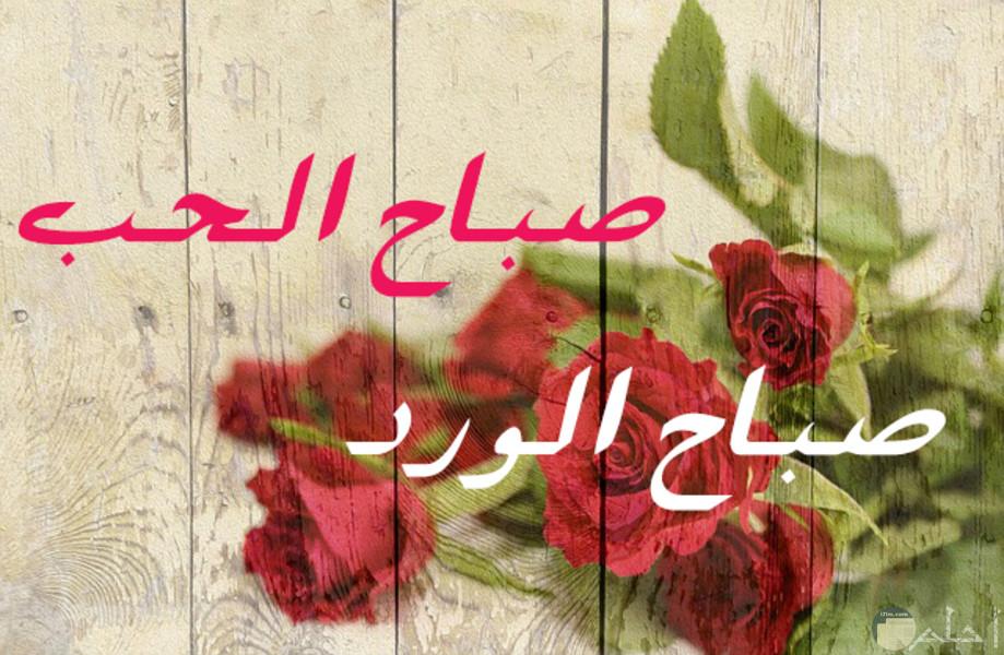 صباح الحب مع الورد الأحمر
