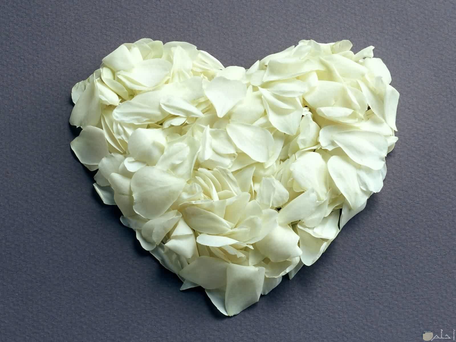 صحبة من الزهور تشكل قلب أبيض