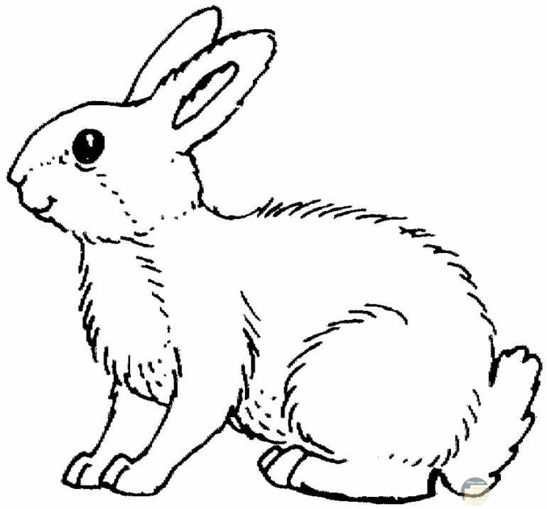 صورة أرنب لطيف