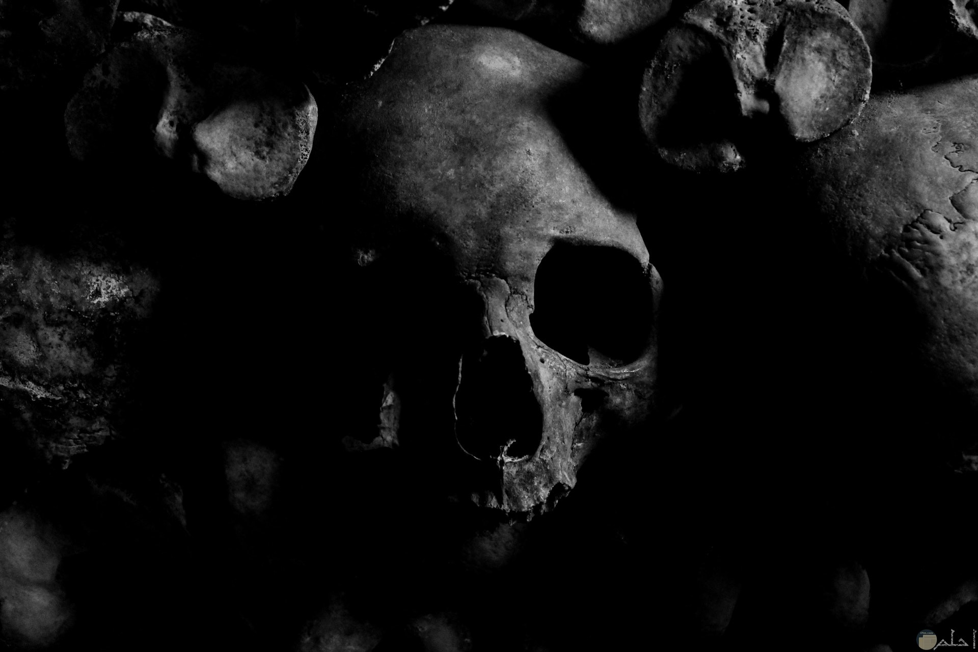 صورة مرعبة لشكل جمجمة مخيفة مع خلفية مخيفة