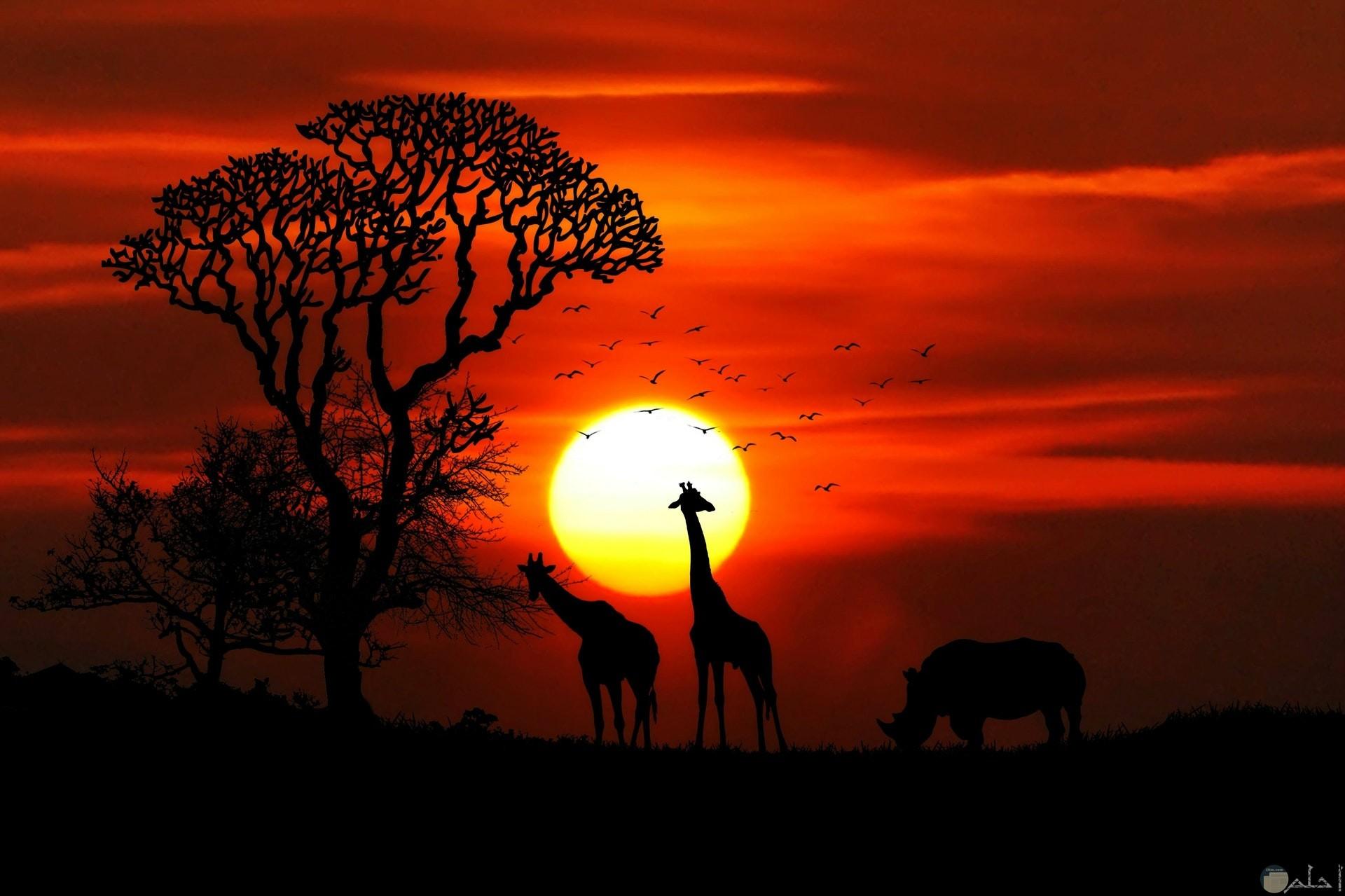 صورة مميزة وجميلة للطبيعة وقت الغروب ووجود حيوانات الغابة