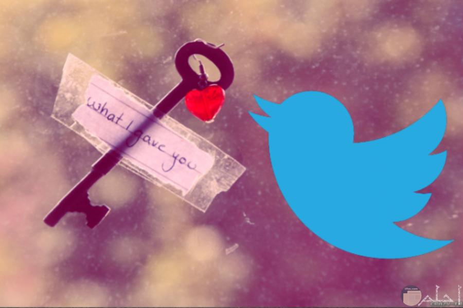صورة رومانسية لعصفور تويتر