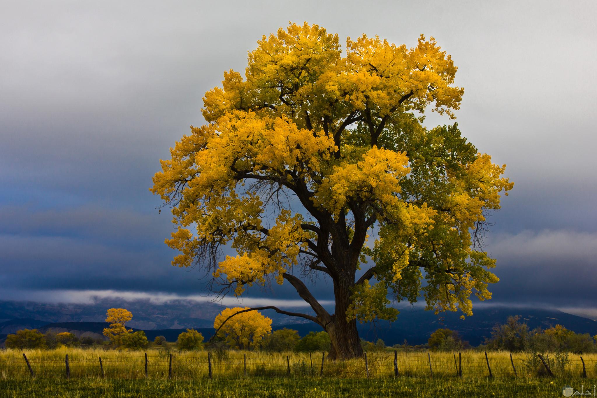 صورة شجرة جذابة