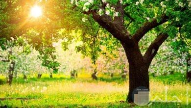 صورة شجرة