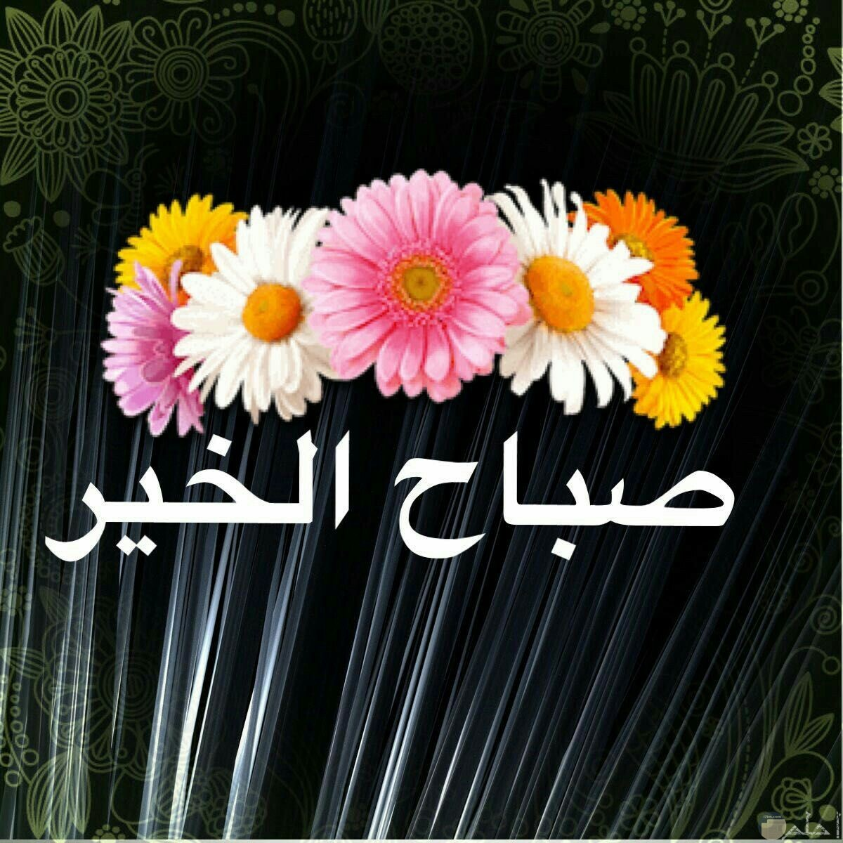 صورة جميلة لتحية الصباح مكتوب عليها صباح الخير وفوقها تاج من الزهور