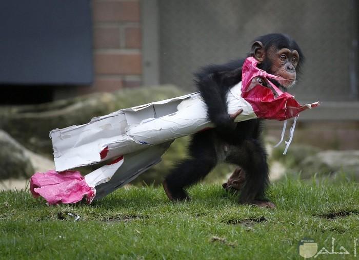 صورة غريبة لقرد لطيف