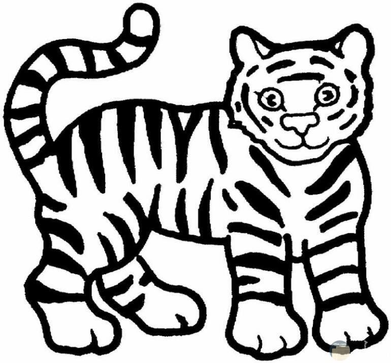 صورة قطة مرسومة ابيض واسود