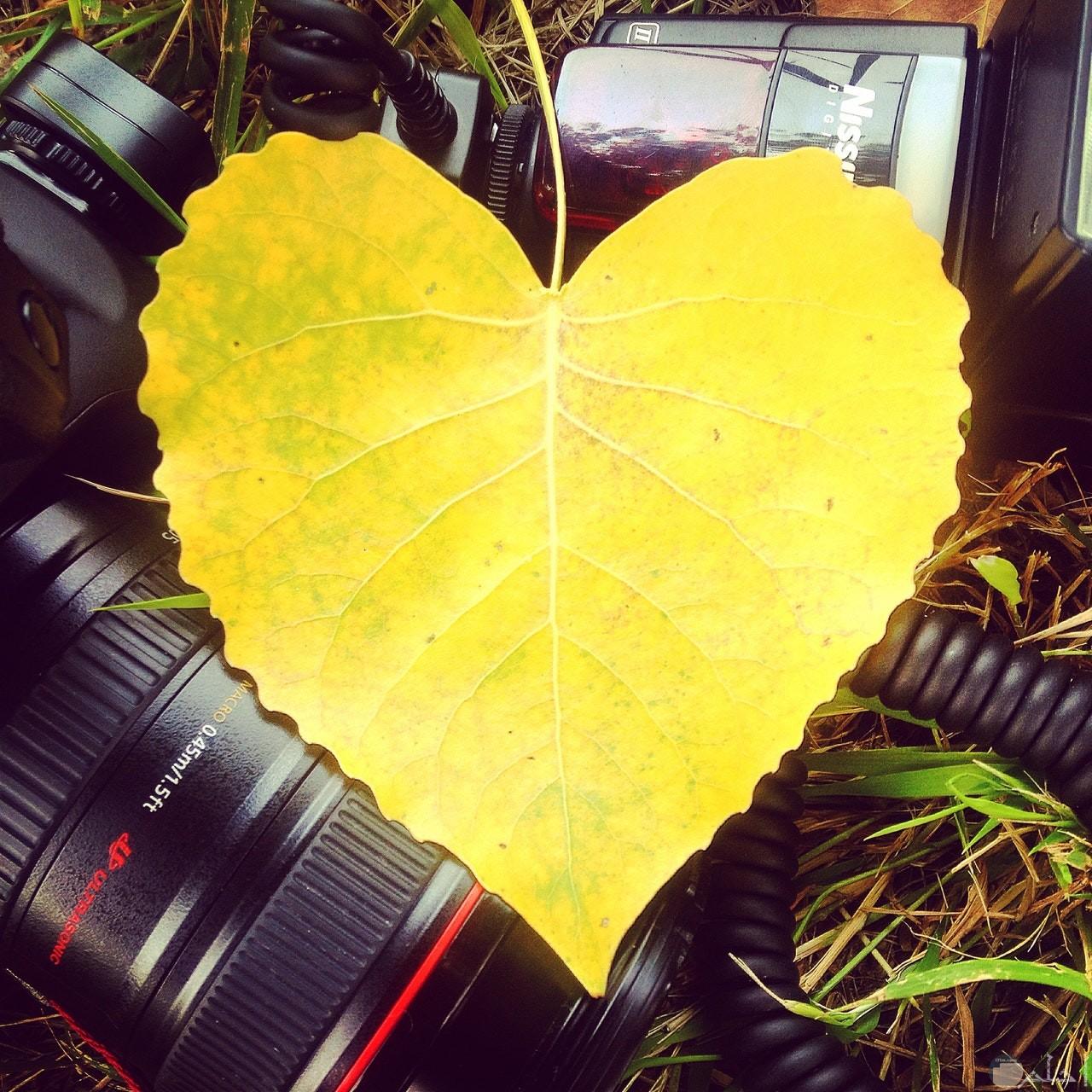 صورة قلب أصفر جميل علي شكل ورقة شجر