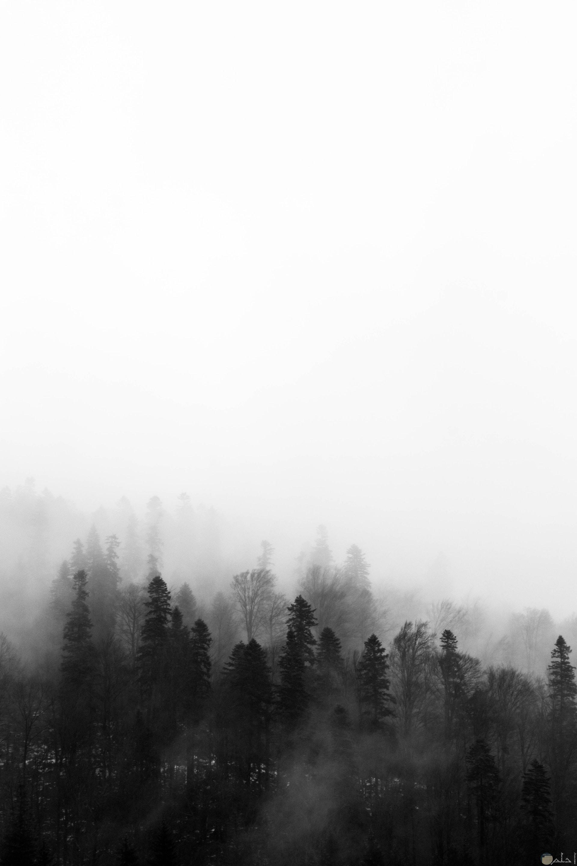 صورة كئيبة وحزينة بالأبيض والأسود لشكل الغابة