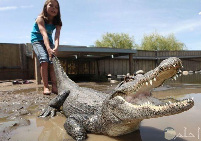 صورة لطفلة مع تمساح كبير