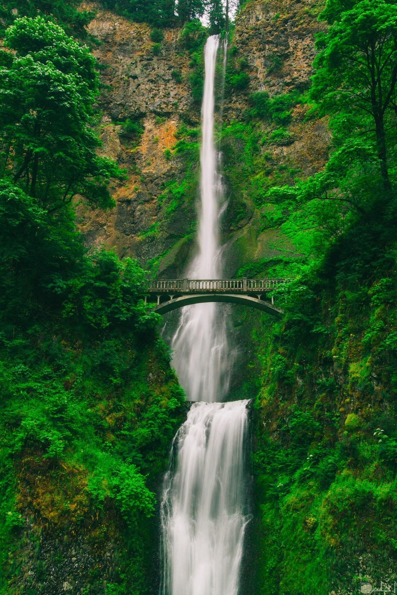 صورة رائعة للطبيعة حيث الشلال وسط الأشجار الخضراء الجميلة