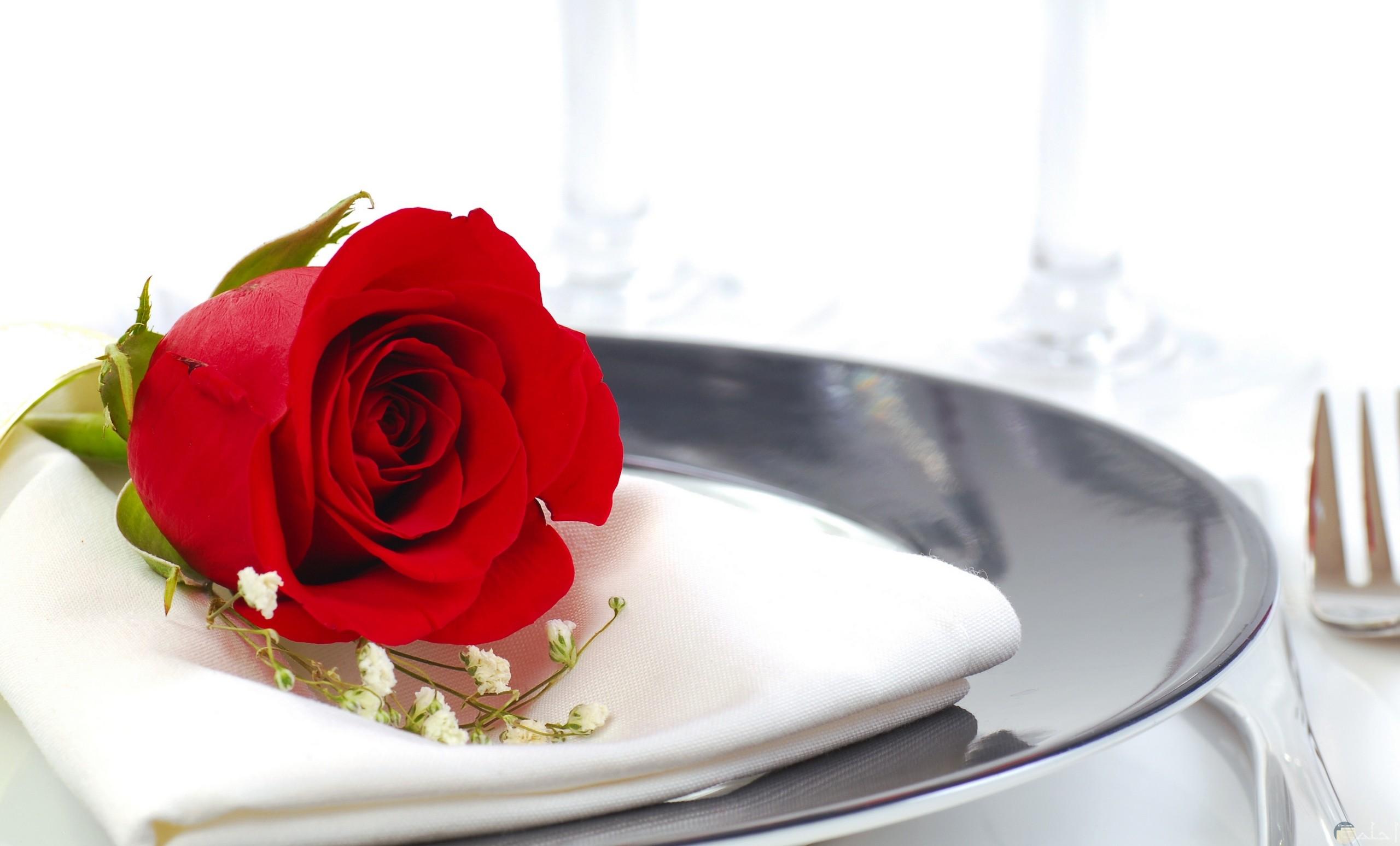 صورة لورده حمراء واحدة جميلة موجودة علي طبق