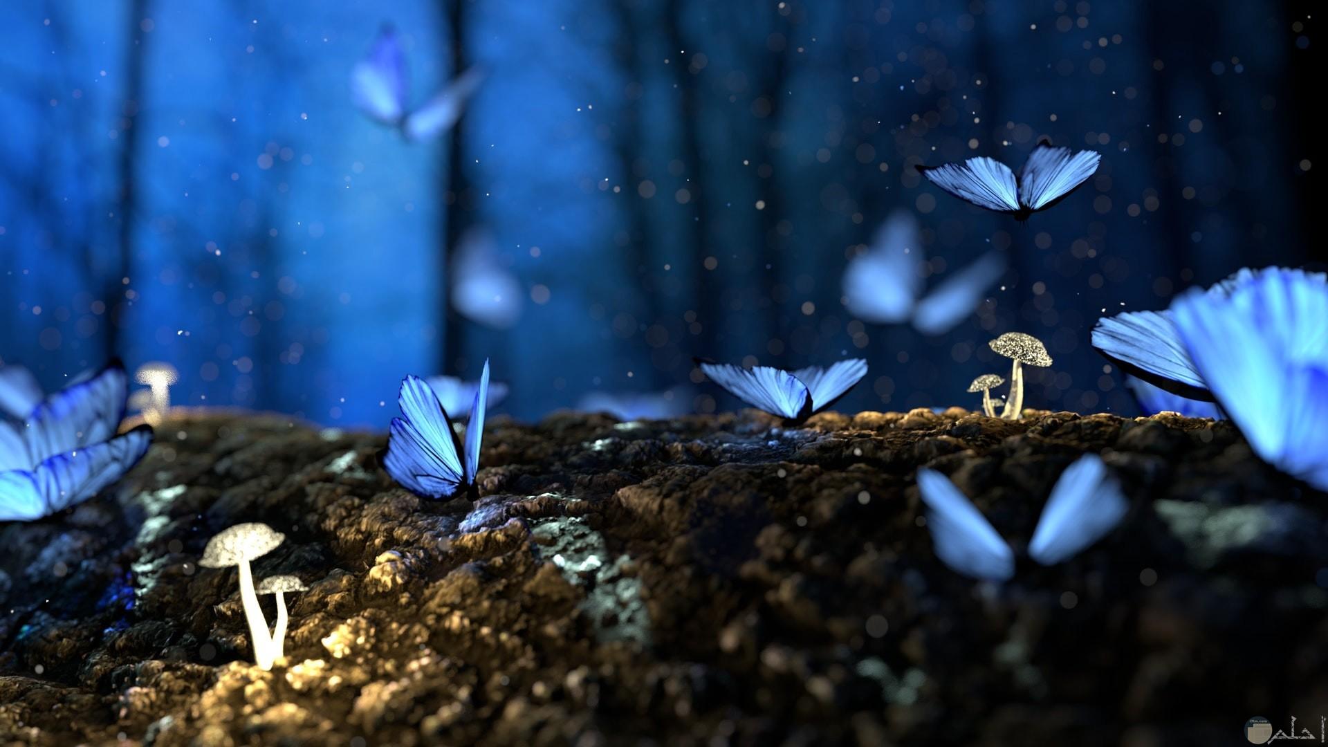 صورة جميلة للطبيعة حيث الفراشات الزرقاء التي تزين الغابة