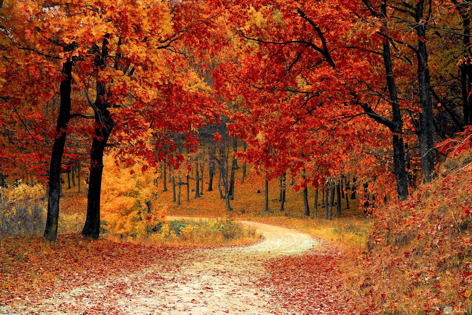 صورة مميزة للطبيعة في فصل الخريف وتساقط أوراق الأشجار