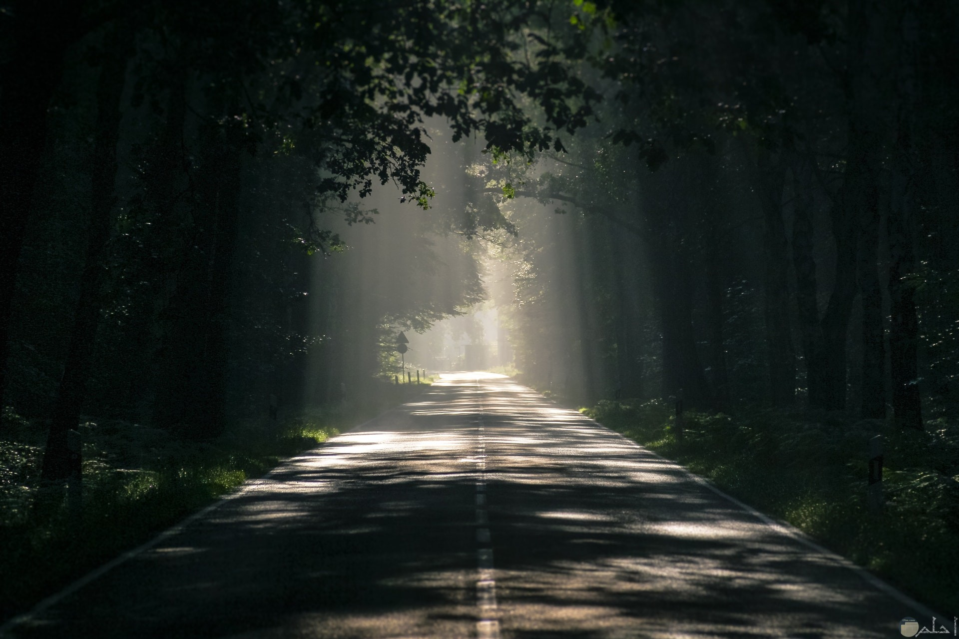 صورة مميزة لطريق في الغابة تحيطه الأشجار من الجانبين