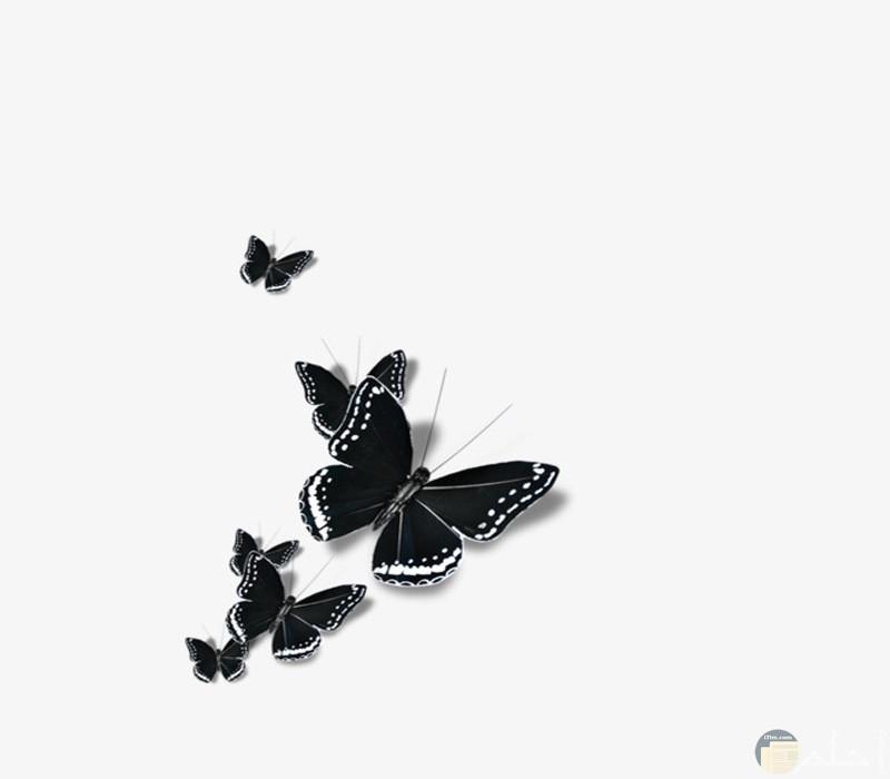 صور أبيض وأسود رسم للفراشات2