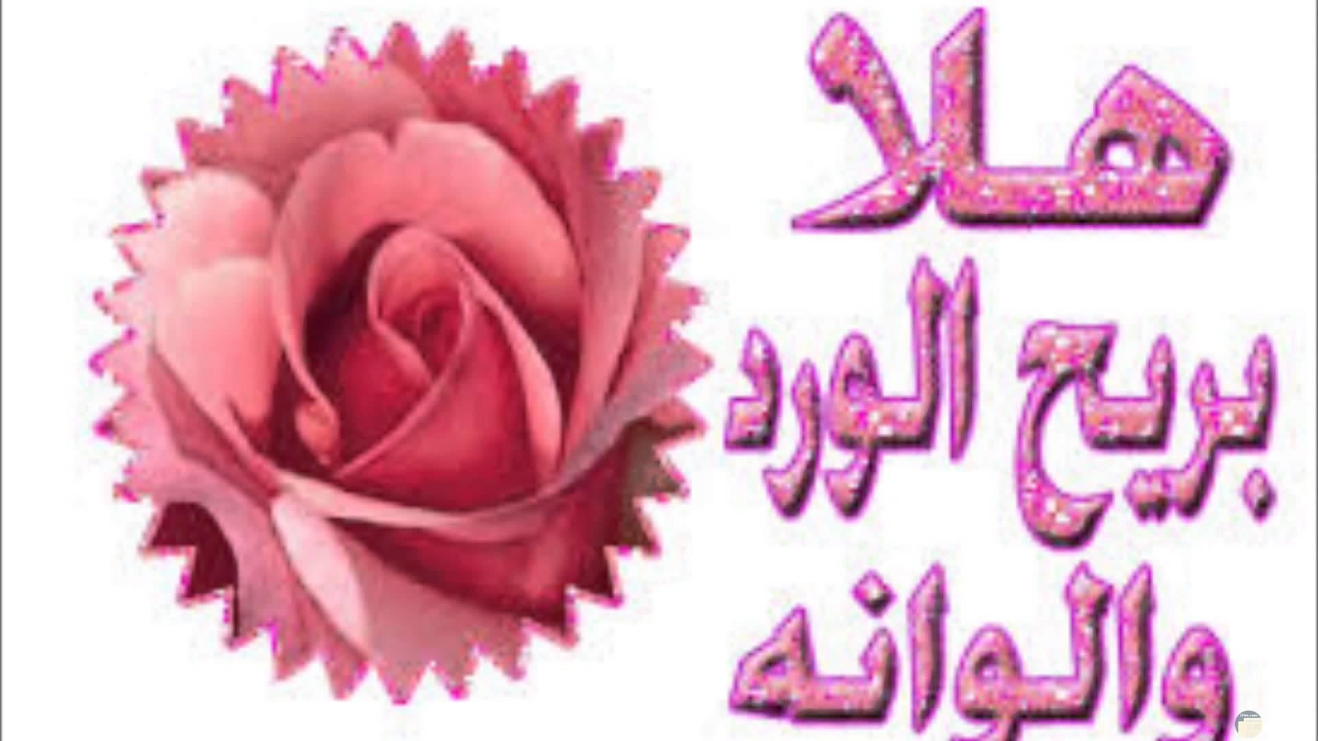صورة بها وردة ومدونه بعبارات ترحيب